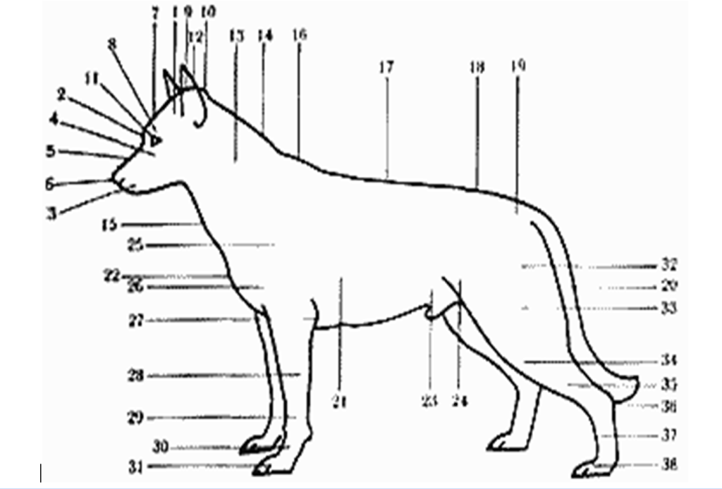Описание Собаки